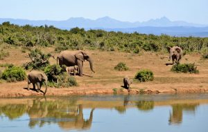 5 Reasons to Visit Zambia-Africa Travel