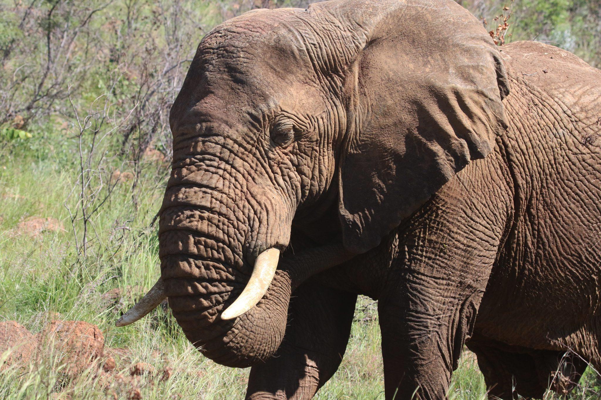 5 reasons to visit zambia